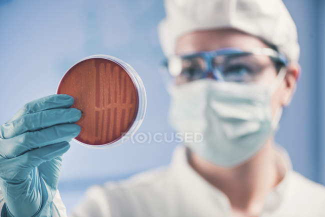 Microbiologist inspecting petri dish and observing bacteria growth. — Stock Photo