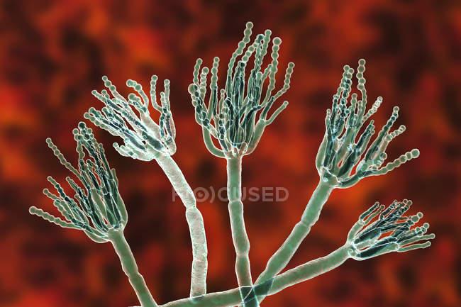 Ilustración digital de hongos Penicillium e hilos especializados de conidióforos . - foto de stock