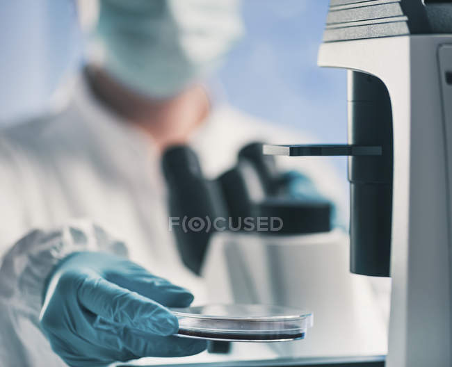 Microbiologist using light microscope while holding petri dish in lab. — Stock Photo