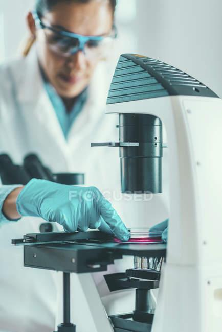 Ricercatrice ricercatrice campionaria in capsule di Petri al microscopio ottico . — Foto stock