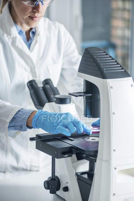 Wissenschaftler erforscht Probe in Petrischale unter Lichtmikroskop. — Stockfoto