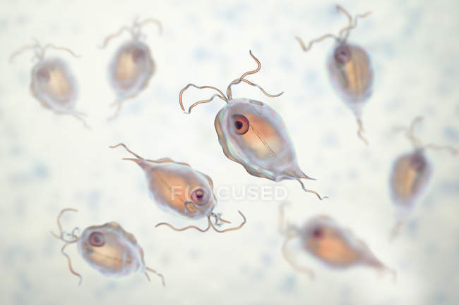 Group of Trichomonas hominis protozoan parasites, digital illustration. — стокове фото