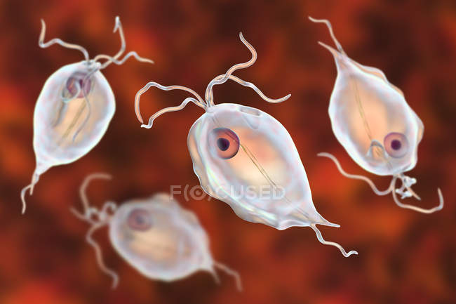 Group of Trichomonas hominis protozoan parasites, digital illustration. — Stock Photo