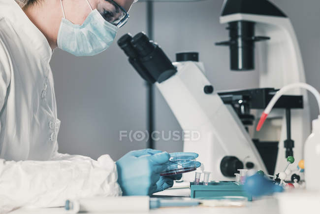 Microbiologist working in laboratory with bacteria growth in petri dish. — Stock Photo