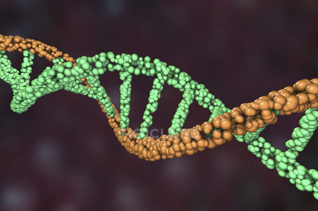 Colored DNA double helix molecule, digital illustration. — Stock Photo