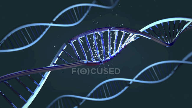 Helical DNA molecules, digital illustration. — Stock Photo