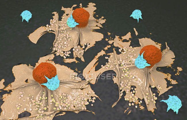 3D-Illustration von Krebszellen, die von Lymphozyten angegriffen und getötet werden. — Stockfoto