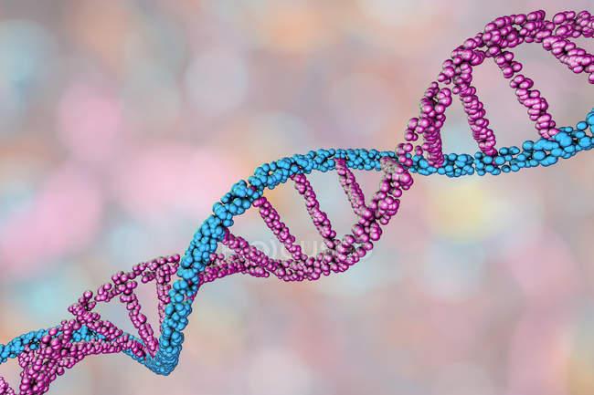 Молекула подвійної спіралі ДНК, цифрова ілюстрація. — стокове фото