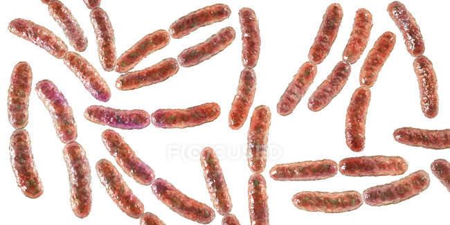 Бактерии молочной железы в тонком кишечнике человека, цифровая иллюстрация . — стоковое фото