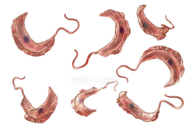 Digital illustration of trypanosome protozoan parasites causing sleeping sickness transmitted by blood. — Stock Photo