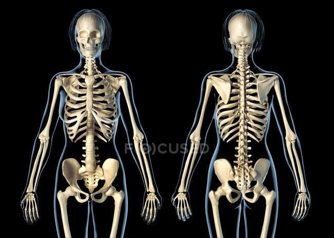 Sistema esquelético femenino sobre fondo negro . - foto de stock