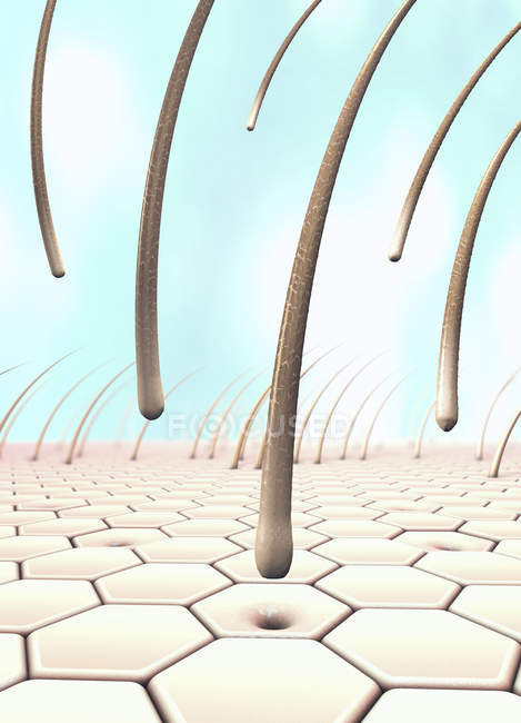 3D-Illustration mehrerer fallender Haare, die sich von der Haut gelöst haben. — Stockfoto