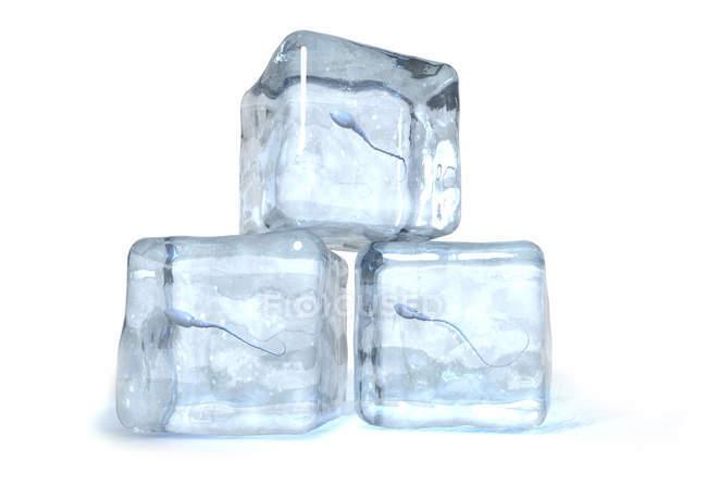 3D ілюстрація сперматозоїдів заморожені кубиками льоду. — стокове фото