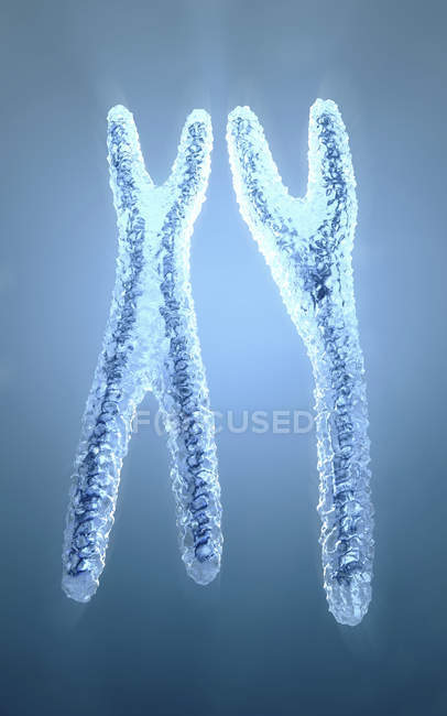 3d illustration of normal looking blue colored and transparent x and y chromosomes. — Stock Photo