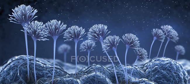 Hongo abstracto, ilustración científica digital . - foto de stock