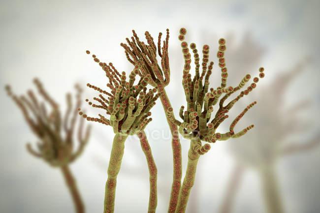 Ilustración digital del hongo Penicillium roqueforti utilizado en la elaboración de quesos . - foto de stock