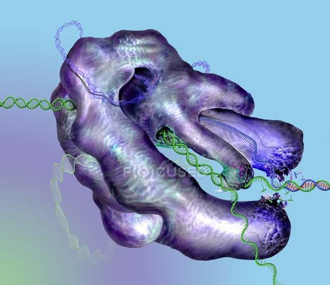 Crispr-cas9 Gene-Editing-Komplex in DNA und Zellen, konzeptionelle Illustration. — Stockfoto