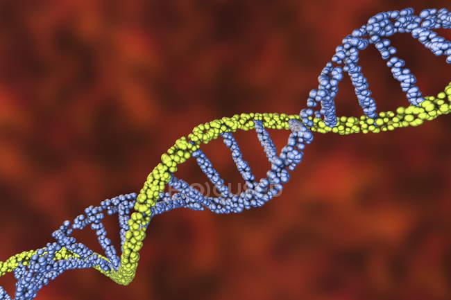 Цветная молекула двойной сhelix, цифровая иллюстрация. — стоковое фото