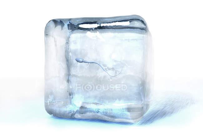 3D ілюстрація клітини сперми заморожена в кубик льоду. — стокове фото