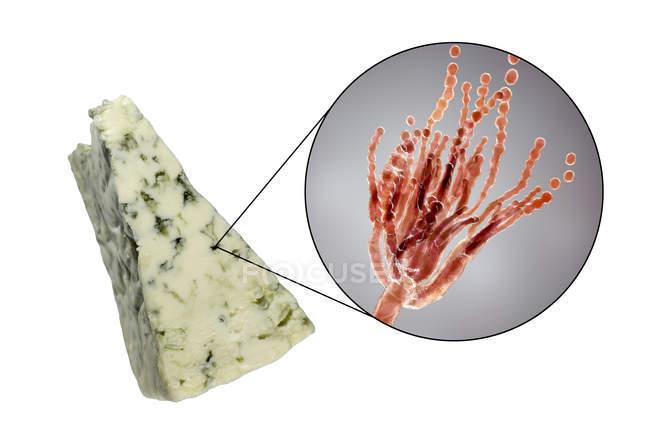 Roquefort-Käse und digitale Illustration des Pilzes Penicillium roqueforti. — Stockfoto