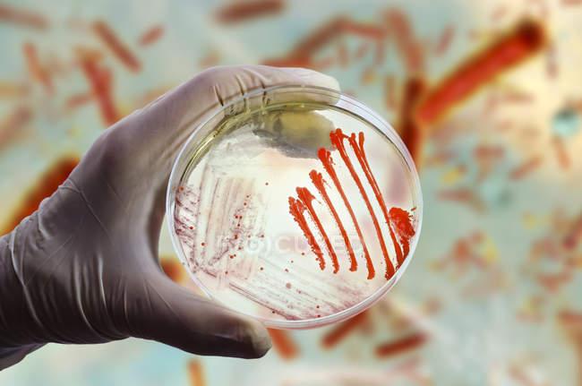 Imagen compuesta de cultivos bacterianos y fúngicos en placa de Petri en mano científica frente a la ilustración microbiana . - foto de stock