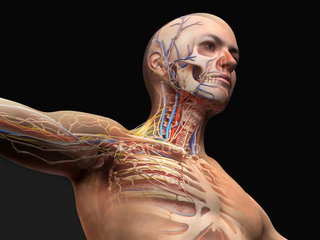 Diagramme d'anatomie de la tête et de la poitrine masculine avec effet fantôme sur fond noir . — Photo de stock