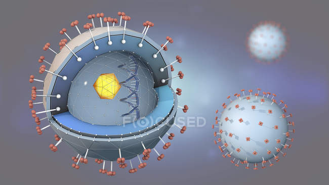 3d illustration of cross-section of hepatitis pathogen with DNA, cell nucleus and receptors. — Stock Photo