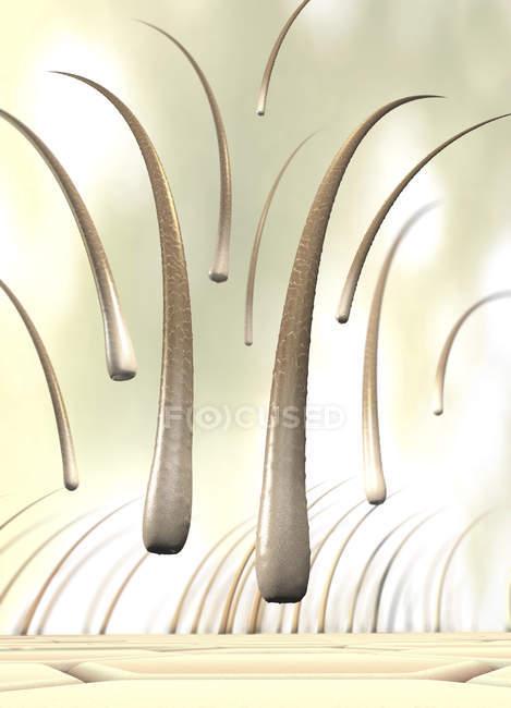 3d ilustración de varios pelos caídos que se han separado de la piel . - foto de stock