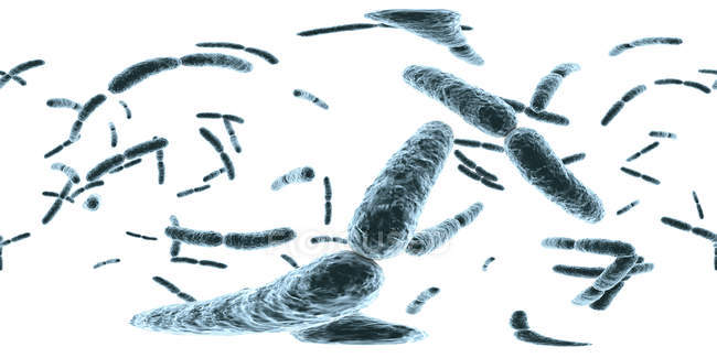Batteri Lactobacillus, illustrazione digitale con panorama a 360 gradi . — Foto stock