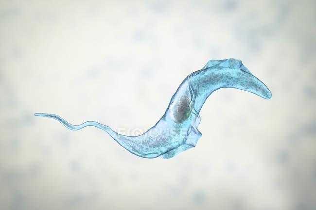 Digital illustration of trypanosome parasite causing Chagas disease. — Stock Photo