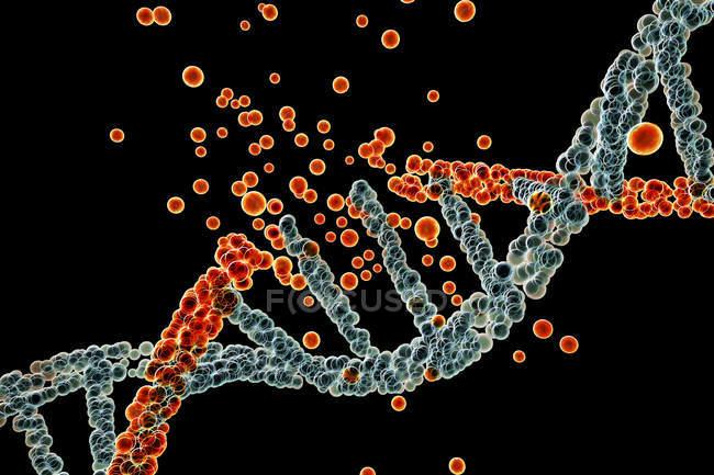 Daño de la molécula de ADN de color en el fondo negro, trastorno genético ilustración conceptual . - foto de stock