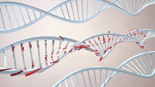 Molecole di DNA elicoidali, illustrazione digitale . — Foto stock