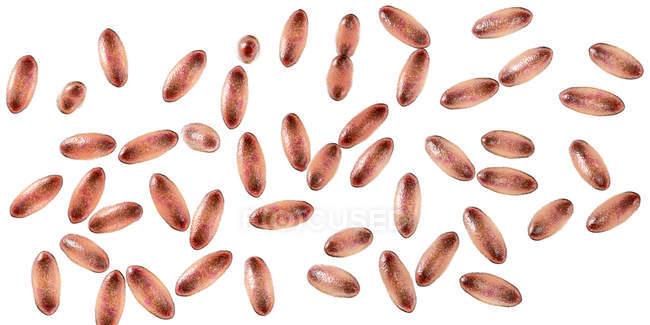 Bacterias gramnegativas de la peste Yersinia pestis con tinción bipolar, ilustración 3D . - foto de stock