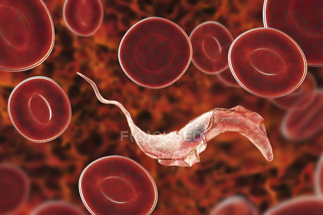 Digital illustration of trypanosome parasite in blood causing Chagas disease. — Stock Photo