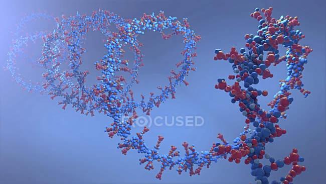 Ácido nucleico, ilustración digital abstracta . - foto de stock