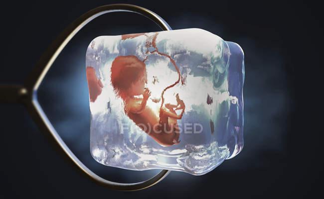 3D ілюстрація кріоконсервованого плода заморожена в кубик льоду, що проводиться металевими плоскогубцями. — стокове фото