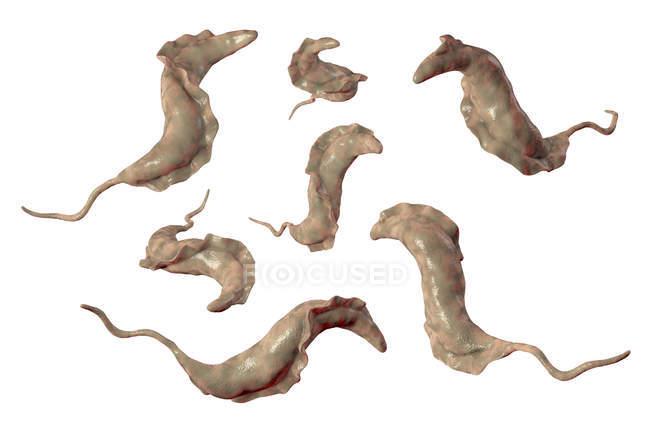 Digital illustration of trypanosome parasites causing Chagas disease. — Stock Photo