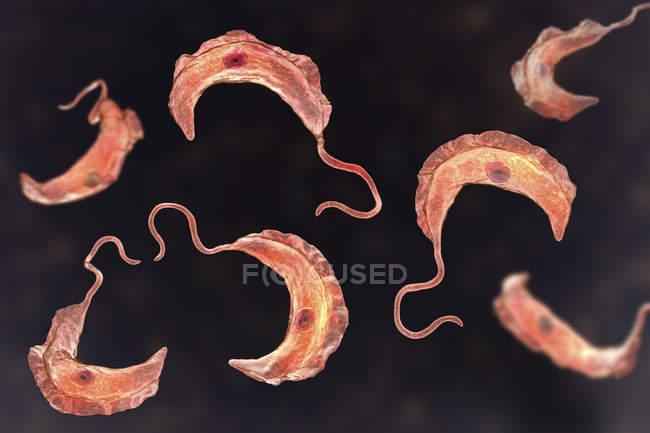Ilustración digital de parásitos protozoarios del tripanosoma que causan la enfermedad del sueño transmitida por la sangre . - foto de stock