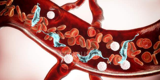 Цифрова ілюстрація паразитів трипільської крові в кровоносних судинах, що спричиняє хворобу Чагаса. — стокове фото