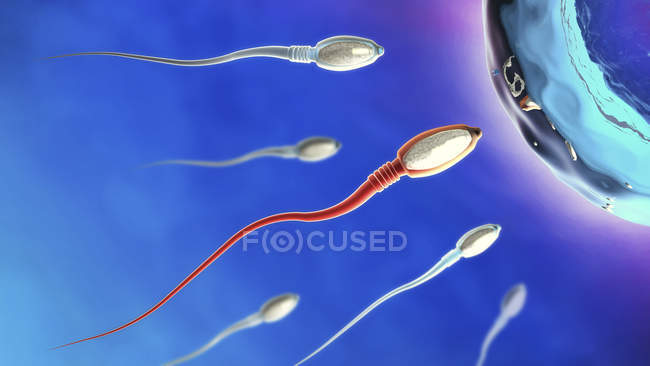 Ilustración 3d de espermatozoides acercándose a óvulos sobre fondo azul . - foto de stock
