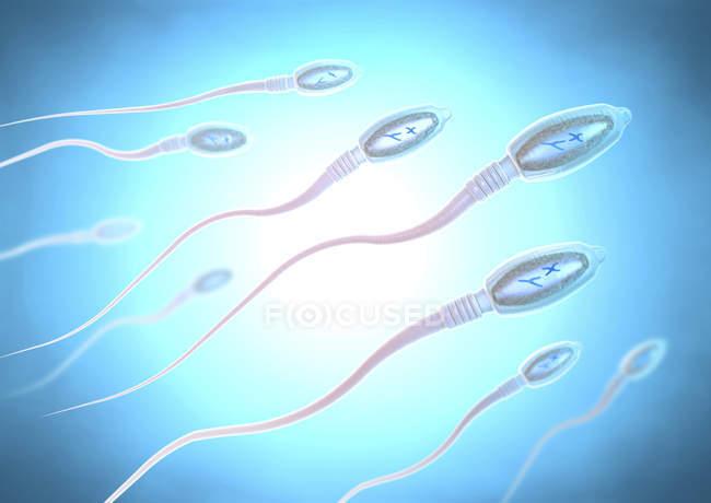 3D ілюстрація клітини сперми людини в репродуктивному процесі. — стокове фото