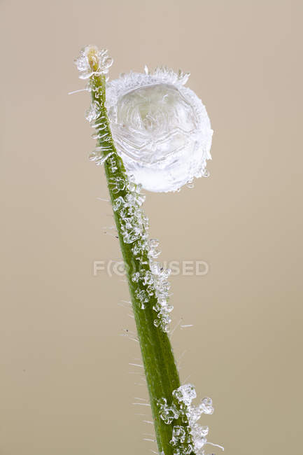 Close-up of frozen dew drop at tip of grass blade. — Stock Photo