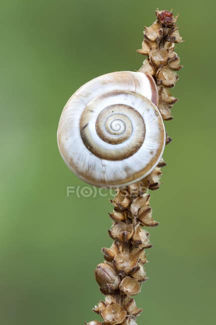Close-up of land snail on wild plant stem. - foto de stock