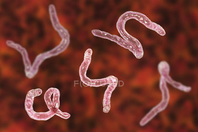 Digital illustration of parasitic Ancylostoma duodenale hookworms. — Stock Photo