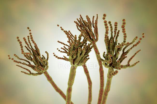 Ilustração digital do fungo Penicillium roqueforti usado na fabricação de queijos . — Fotografia de Stock