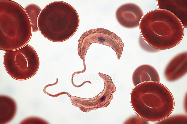 Digital illustration of trypanosomes in red blood cells in blood causing sleeping sickness. — Stock Photo