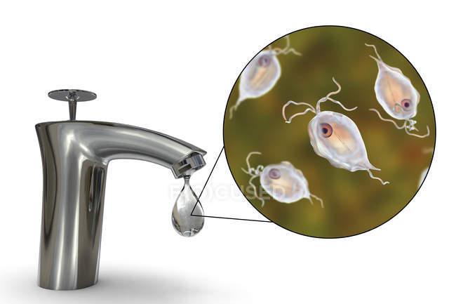 Sécurité de l'eau potable. Illustration conceptuelle affichant des parasites d'hominis de Pentatrichomonas dans la goutte d'eau du robinet. — Photo de stock