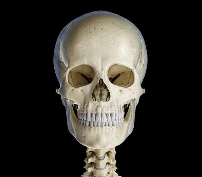 Calavera humana en vista frontal sobre fondo negro . - foto de stock