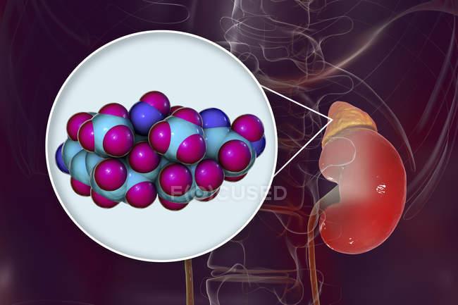 Modelo molecular do hormônio cortisol e ilustração digital da glândula adrenal . — Fotografia de Stock