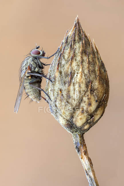 Close-up of tiger fly at top of dried wild plant. — Foto stock